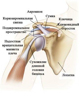 Хрящевые суставы рук гимнастика для суставов ермо